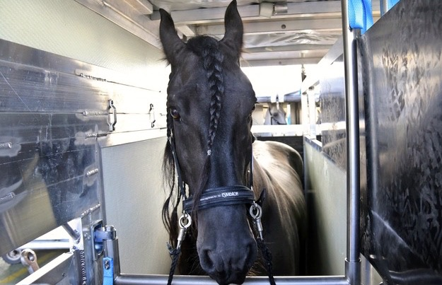 first-flight-out-for-hungarian-horses